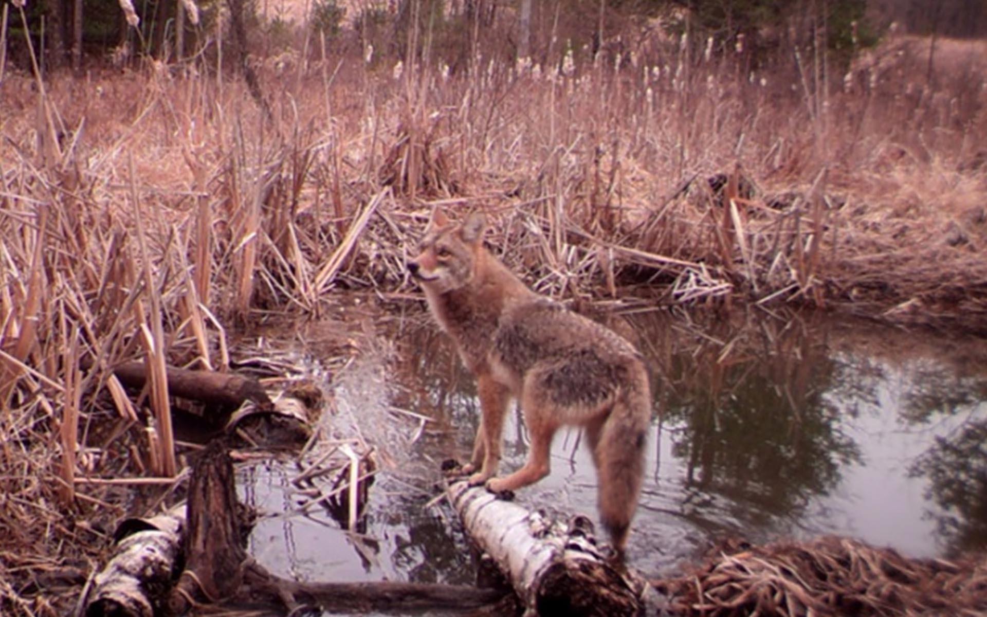Permalink to:Eastern Wildway